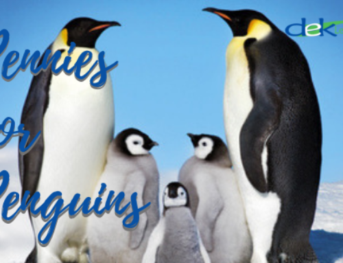 Pennies for Penguins: Top 5 Ways Non-Profits Stay Profitable